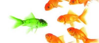 Richting de droombaan: wat is je onderscheidend vermogen?